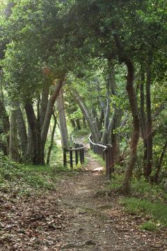 Kamariya_forest_26