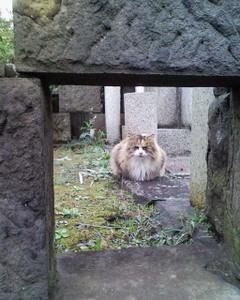 Aoyama_cemetery_03