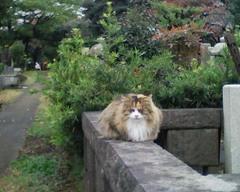 Aoyama_cemetery_04