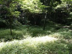 Shikinomori_004