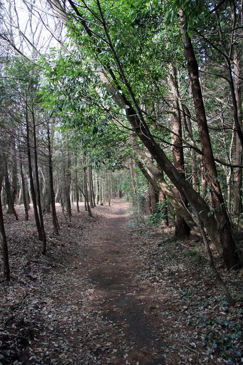 Seya_forest_03