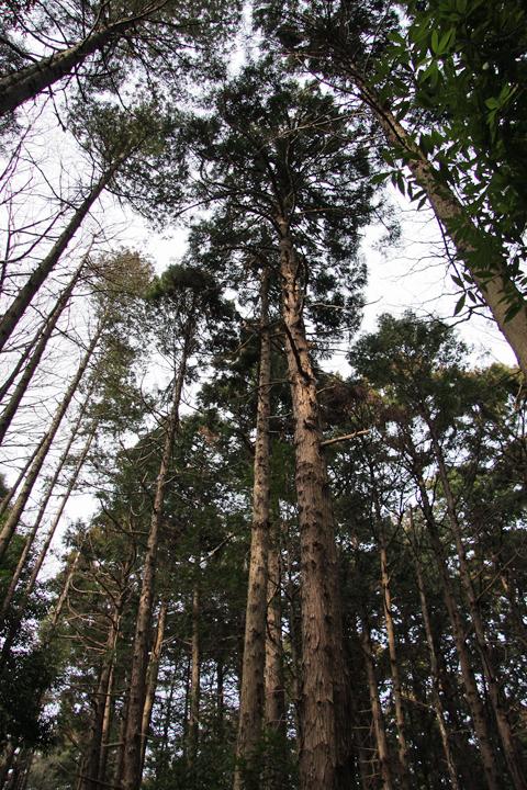 Seya_forest_04