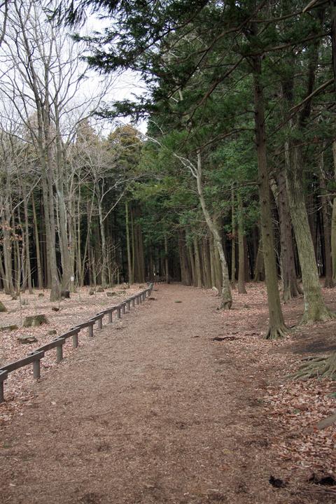 Seya_forest_10
