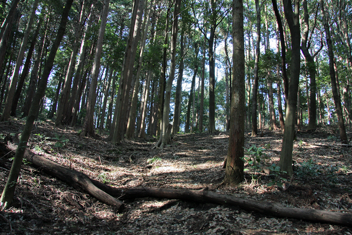 Miho_forest_34