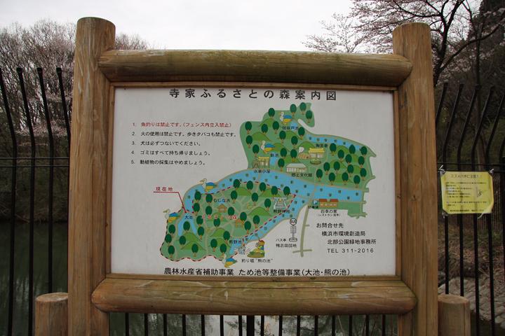 Jike_forest_26
