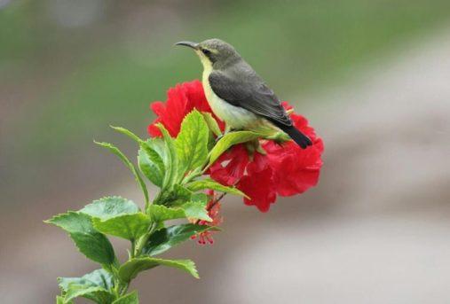 Top 25 Wild Bird Photographs of the Week: Sunbirds and Spiderhunters - Wild  Bird Revolution