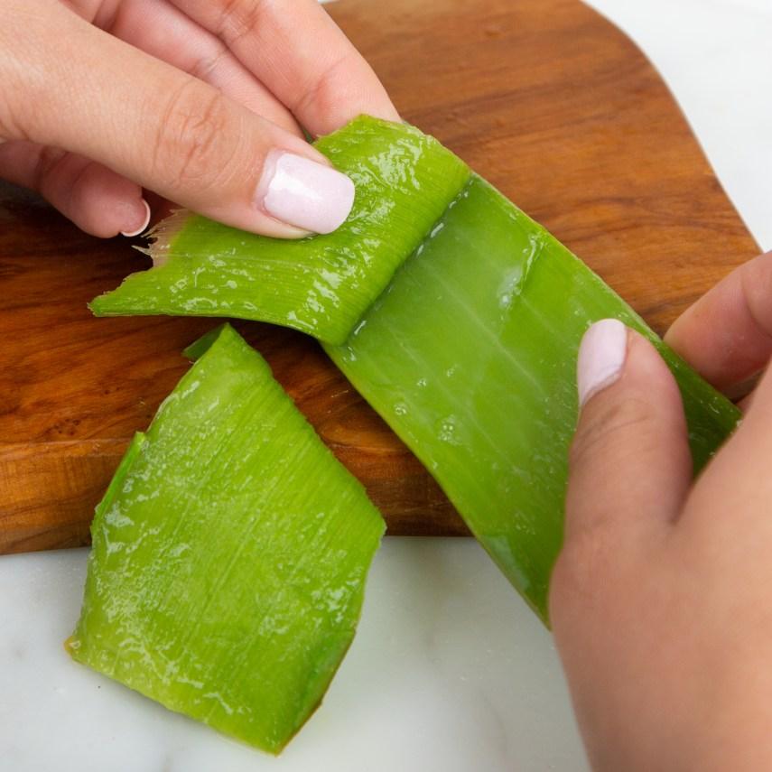 cut open aloe vera plant