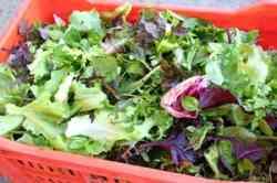Gemengde Salade, Het hele Jaar Door.