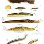 Verschillende Vragen over Slakken, Mulchen, Zaaien en Zevenblad