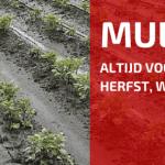 Mulch Is Een Zegen In De Zomer!