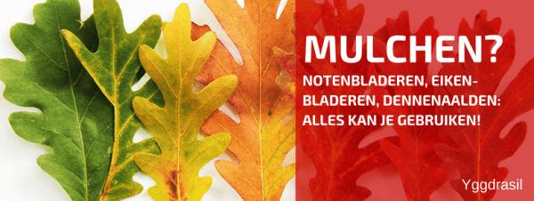 Mulchen met Eikenblad en Notenblad?