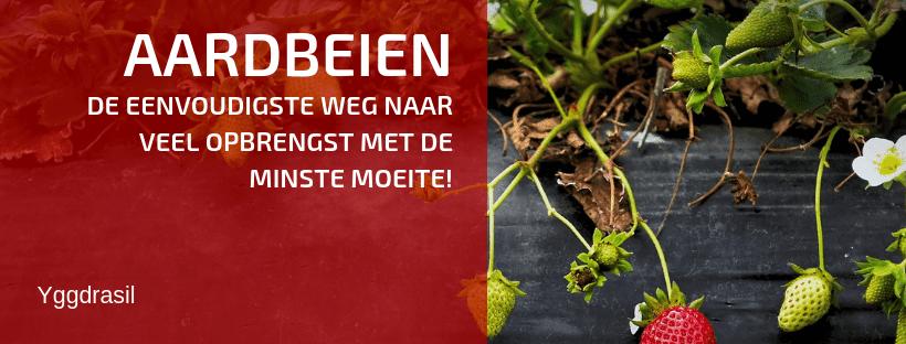Hoe Planten en Kweken Wij Aardbeien?