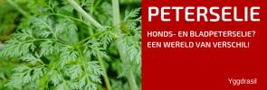 Plantbespreking: Hondspeterselie (Aethusa Cynapium)