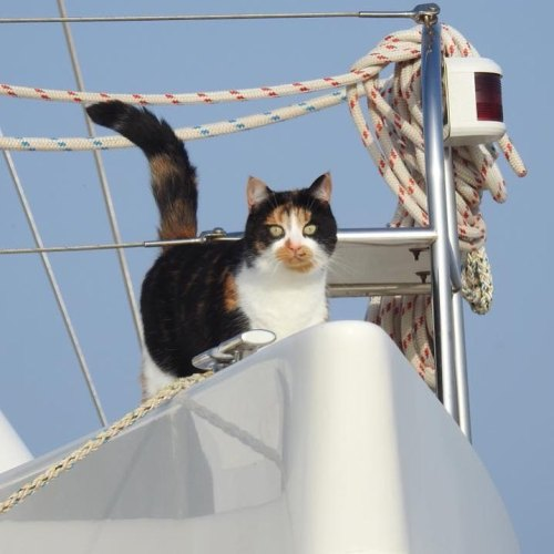 Purrfect spot for Jessie the sailing cat.