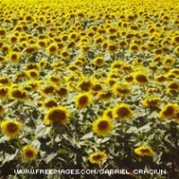 summer-flower-GabrielCraciun