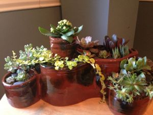 Earthenware Sectional Succulent Planter