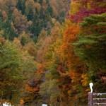磐梯山ゴールドラインの紅葉