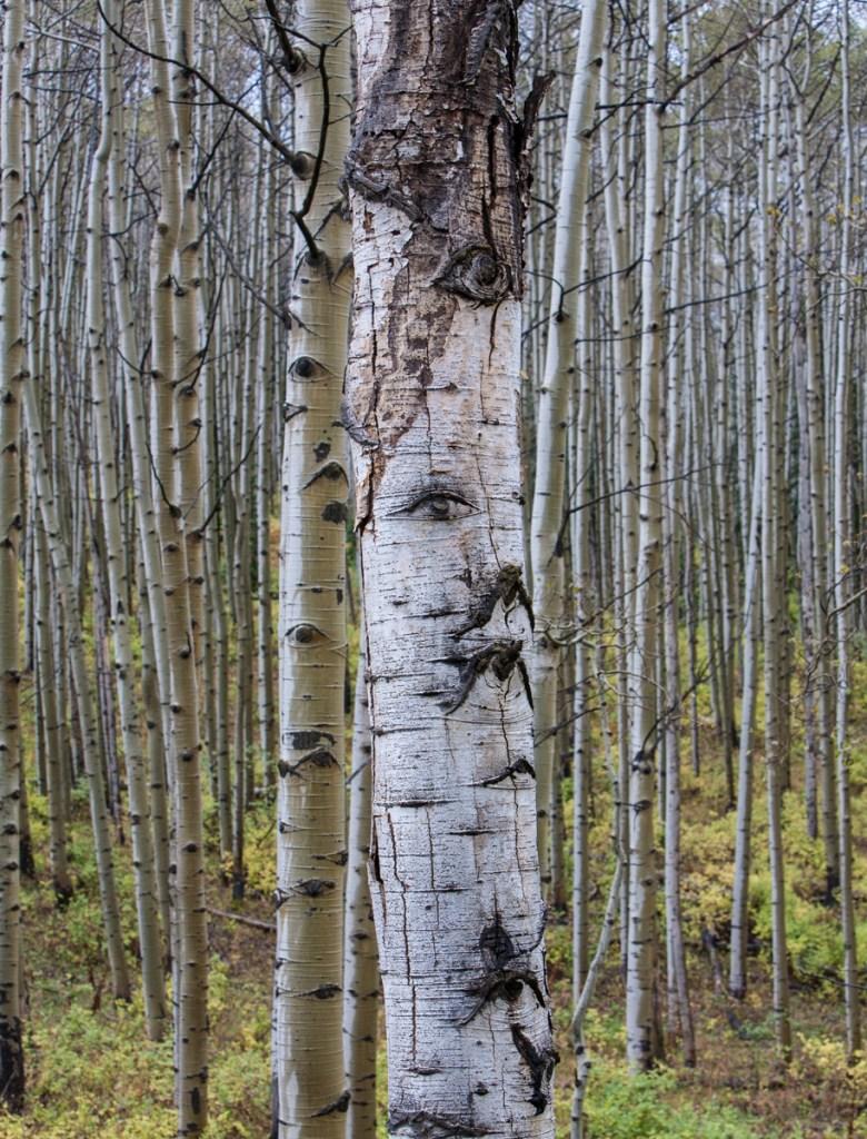 Unnamed Roadless Area, Colorado | Roadless Project © Nelson Guda 2019