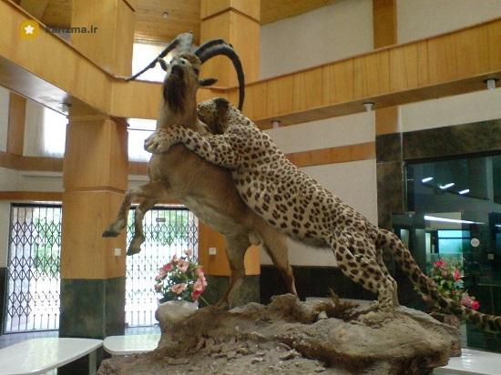 موزه حیات وحش بهترین موزه های تهران