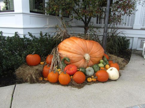 Huge display of colorful pumpking and gourds at Wentworth By The Sea Hotel