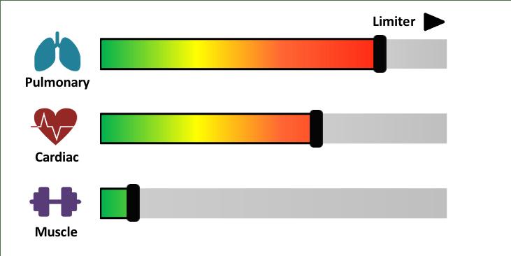 test assessment 5-1-5 moxy facteurs limitations de la performance de athlete