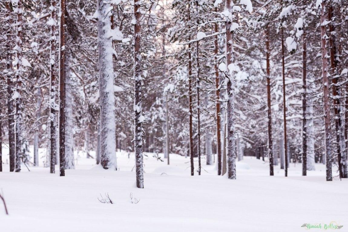 Laponie, voyage, ninaah bulles, finlande, neige, photo, paysage, voyage, blog voyage, cercle arctic, arctique, grand nord, grand froid
