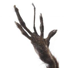 Hand of an Aye Aye