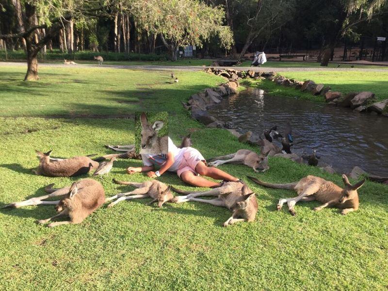 カンガルーと集合写真 (Currumbin Wildlife Sanctuary)