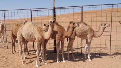 Entspannter Tag in der Wüste