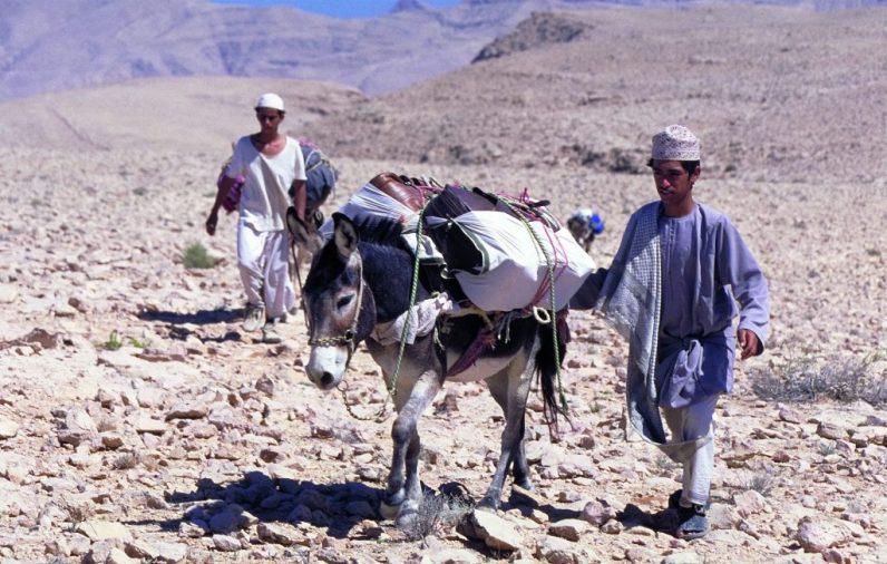 Oman: Eseltrekking im Oman