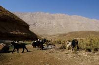 Im Zagros-Gebirge, Region Zard Kuh