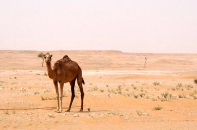 Neue Bekanntschaften im Oman
