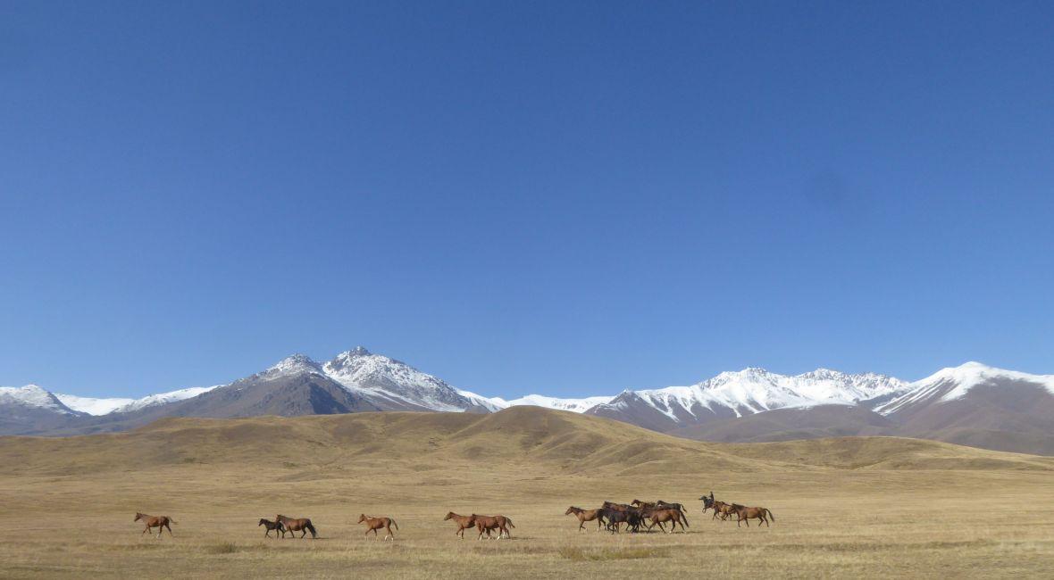Pferdeherde mit Hirten