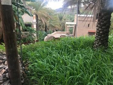 Blick auf die grüne Idylle in Misfah al-Ibriyeen