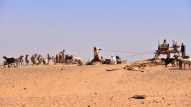 Kamele dienen der Wasserbeschaffung