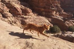 Meine Lieblingsfotomotive in Petra