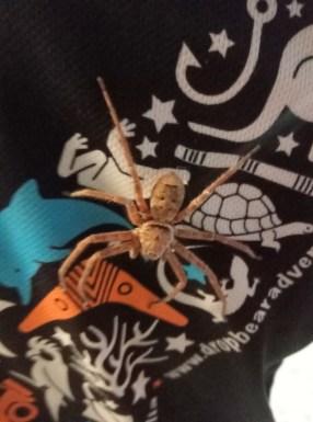 Fraser Island - handtellergroße Spinne