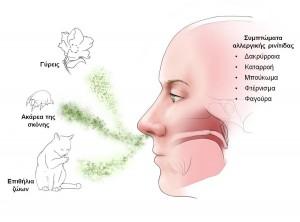 Τα εισπνεόμενα αλλεργιογόνα ανήκουν σε 4 κατηγορίες γύρεις, σκόνη, μύκητες και επιθήλια ζώων