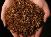 Επικίνδυνα μικρόβια απειλούν όσους μασάνε καπνό