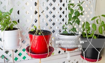 Homemade pot hanging system with aromatic plants