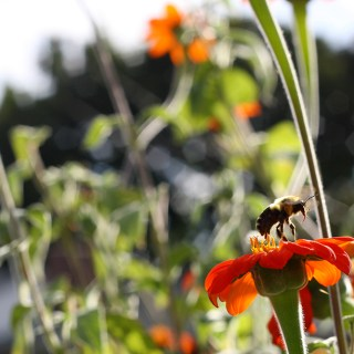 Lessons from the Honey Bees