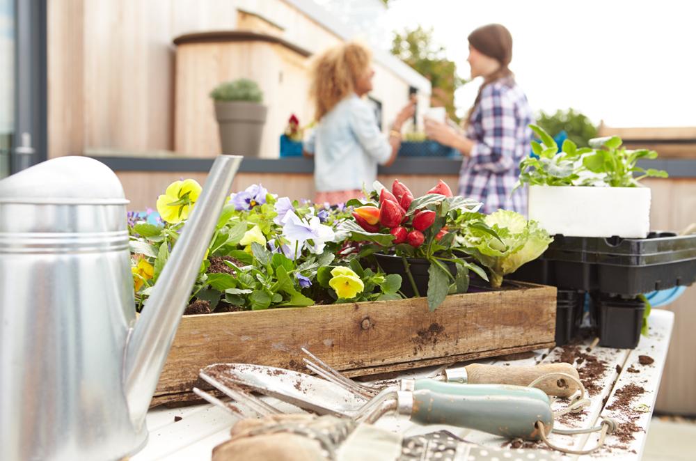 Water Saving Garden Tips