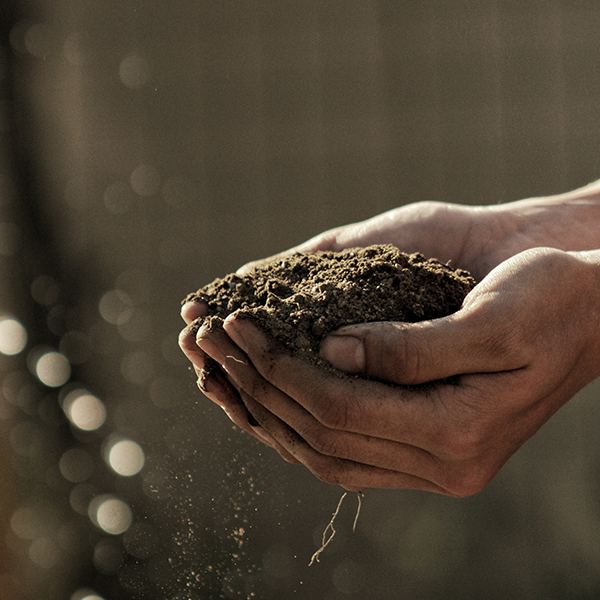 Add compost to soil to save water.