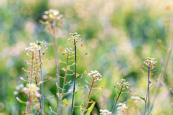 Water-Saving Garden Tips