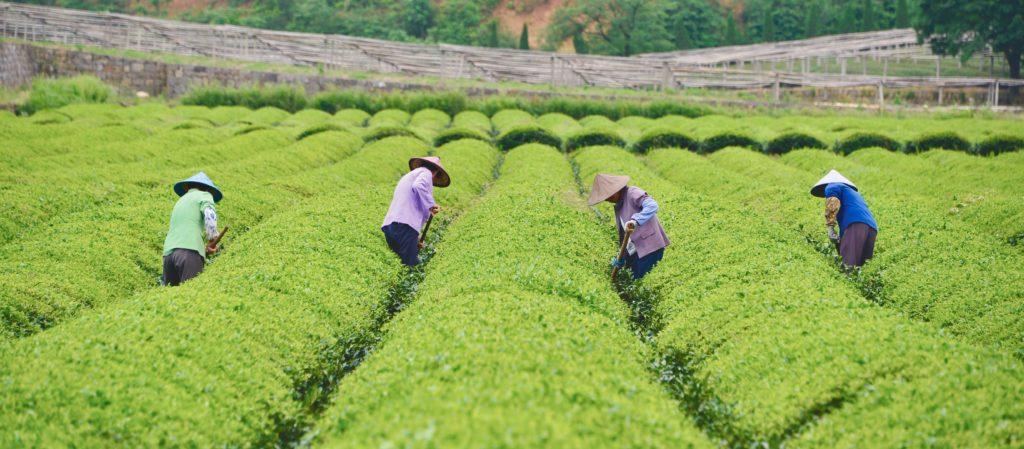 Numi sustainability report