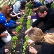 Students at Battery Urban Farm
