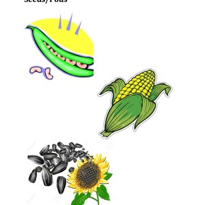 Parts of Plants Seeds