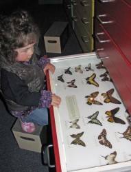 Natural History Collection, South Canterbury Museum. South Canterbury Museum Collection.