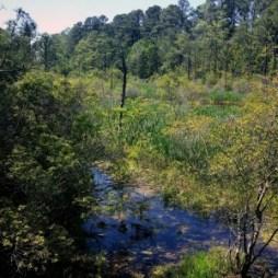 Jamestowne swampland
