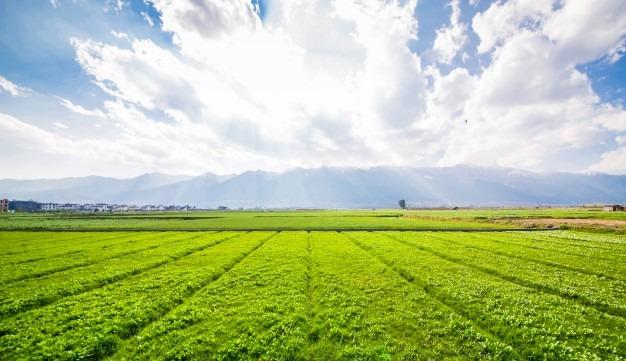 nfe para produtor rural